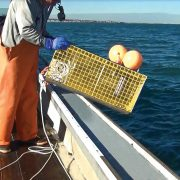 man holding trap tracker on boat